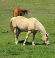 Horse Picture of Chancy